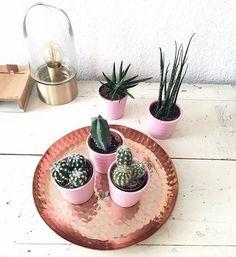 Große Kupfer- und Kakteenliebe #kupferliebe #kupfer #kaktus #kakteen #tablett #deko #dekoration #interior #home #leonardoglasliebe