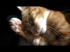 Purrlease DON'T DECLAW Your Cats! - YouTube