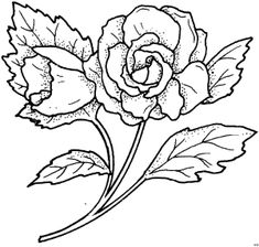 Einfache Schoene Rose - Blumen Colorful Flowers, Coloring Pages, Scrapbooking, Birds, Windows, Dessert, Tattoo, Rose, Drawings