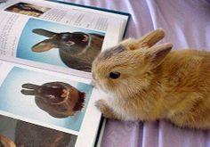 Conejo leyendo