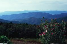 This national park is long and narrow, with the broad Shenandoah River and valley on the west side, and the rolling hills of the Virginia Piedmont on the east. Description from gaygamesblog.blogspot.com. I searched for this on bing.com/images