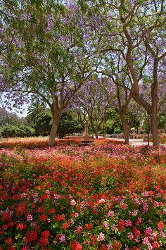 Il giardino delle Esperidi - Cagliari, Sardinia, Italy