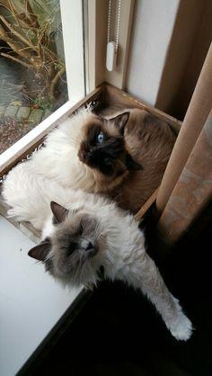 Mika leker knus met Pepper in bakje voor het raam. Animals, Animales, Animaux, Animal, Animais