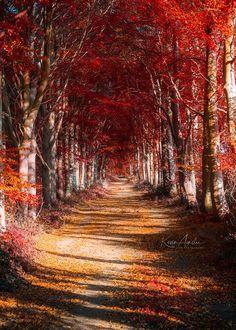 Autumn Walks in Scotland