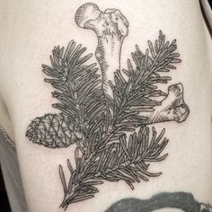 #bones, a #pinecone and pine needles for Will. #tattoo #shannonperry #valentinestattooseattle