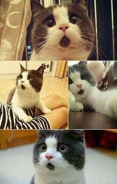 Das ist wirklich skurril, denn auf den ersten Blick wirkt es tatsächlich so, als ob die Cat einen geöffneten Mund hätte!