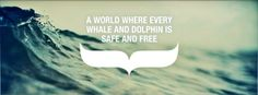 Free whales and dolphins from captivity. Boycott SeaWorld.