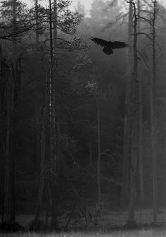 The sound of a crows wings! I always pause to listen when they fly close. (a wilderness sound)