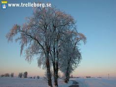 Winter in Trelleborg, Sweden Great Grandparents, Helsingborg, Homeland, Norway, Sweden, Celestial, Sunset, Beach, Winter