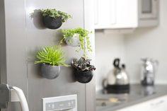 Self Watering Plants, Fridge Decor, Inside Garden, Hanging Vases, Succulent Gifts, White Planters, Herbs Indoors, Edible Plants, Plant Nursery