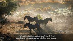 Ray Hunt à dit « Vous devez savoir que quoiqu'il fasse, le cheval est dans son bon droit car vous êtes entré dans sa vie, pas le contraire ».