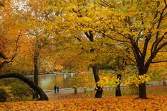 Central Park Tree Walks and Tree Guides