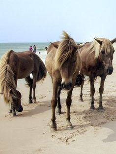 <3 Chincoteague Island - Assateague Island National Seashore - Country Living One of my favorite vacation spots