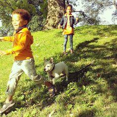 kid fun....... Cool Kids, Lamb, Dogs, Fun, Animals, Instagram, Animales, Animaux, Pet Dogs