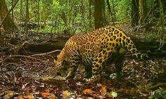 Estudo revela que 23 milhões de animais foram mortos na Amazônia  https://www.google.com.br/amp/oglobo.globo.com/sociedade/sustentabilidade/estudo-revela-que-23-milhoes-de-animais-foram-mortos-na-amazonia-20280141%3fversao=amp?client=ms-android-sonymobile