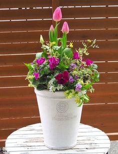 寄せ植え Container Vegetables, Container Plants, Container Gardening, Tiny Flowers, Green Flowers, Pretty Flowers, Dish Garden, Garden Pots, Green Garden