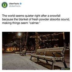 Is that why the world look she peaceful when it's snowing? Uber Facts, Wow Facts, Wtf Fun Facts, Random Facts, Random Stuff, True Facts, Funny Facts, The More You Know, Good To Know