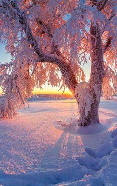 Sunset in winter - Sunset in winter - Winter Photography, Landscape Photography, Nature Photography, Winter Sunset, Winter Scenery, Winter Wallpaper, Winter Magic, Winter Snow, Winter Beauty