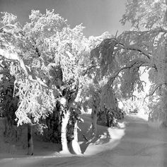 Alfred Eisenstaedt—Time & Life Pictures/Getty Images Not published in LIFE. Mont-Tremblant, Canada, 1945  Read more:  http://life.time.com/culture/winter-scenes-winter-fashions-photos-from-canadian-ski-slopes/#ixzz2tuujcCPD