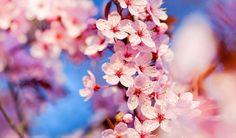 Japánban komoly hagyománya van a virágzó cseresznyefák csodálásának, ezért ehhez a teszthez is felhasználta ezt a mesés látványt egy japán pszichoanalitikus csoport. Az általad választott látványkép sokat elárul rólad, ahogyan arra is rávilágít, hogy mennyire vagy közel a természethez, és annak minden csodájához. Ha kíváncsi vagy rá, akkor nincs más hátra, teszteld magad!  - Női Portál - Női Portál - a nők birodalma - Nőiportál.hu