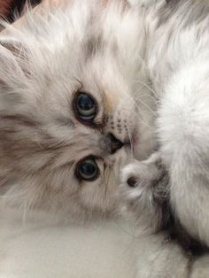 Cute(ᵔᴥᵔ)