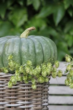 I saw one of these today and thought it was quite pretty. It looks nice alone, with the ghost pumpkins, and some pale peach pumpkins. I will get a few to display.