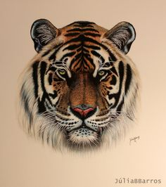 Tiger Drawing by Julia Barros