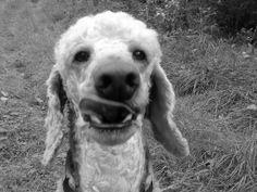 ha ha. Poodle Fun..