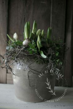 Mooi bloembollenstuk i.p.v. snijbloemen