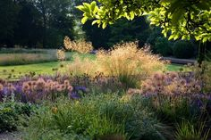 Tall Stipa gigantea provides a backdrop for alliums and nigella in a garden by Michelle Hickman (UK and New Zealand)