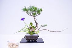 Ikenobo style Candle Arrangements, Ikebana Flower Arrangement, Floral Arrangements, Japanese Flowers, Japanese Art, All Flowers, Wabi Sabi, Ancient Art, Flower Designs