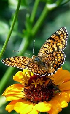 Stunning corner: Butterflies with flowers