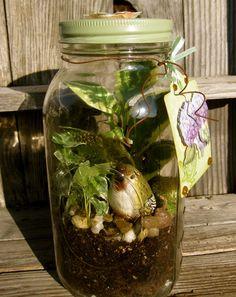 terrarium in a jar...
