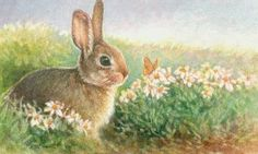 """Bunny & Butterfly in a Daisy Field  """"This little bunny has found a very interesting flying friend in a beautiful field of daises."""""""