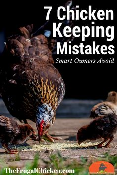 Chicken ownership is easy - and beginner mistakes are just as easy to avoid. There's 7 common mistakes that can lead to trouble down the road. Smart owners avoid them with these tips. Chicken Coup, Chicken Coop Plans, Building A Chicken Coop, Diy Chicken Coop, Chicken Ideas, Chicken Life, Chicken Feed, City Chicken, Chicken Runs