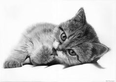 cat by Bengtern.deviantart.com