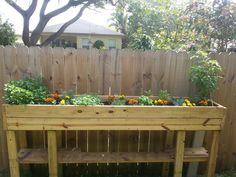 Box garden blooming. From left to right. Mint, rosemary, Oregano,thyme, basil orange peppers and Tomatoes. Some marigolds planted throughout the bed for color and to keep the insects and bugs away.