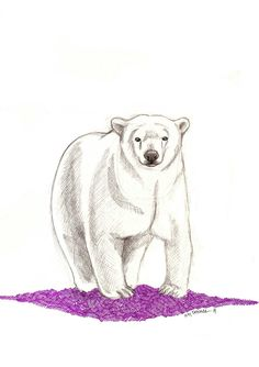 Dibujo de un oso - 2014
