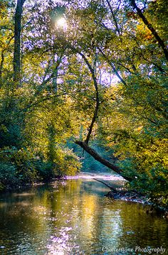 Creek With Colors.jpg