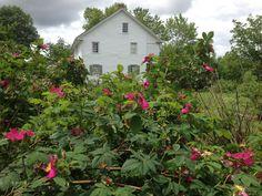 Conococheague Institute, Gardens, Roses, Rock Hill Farm, Davis-Chambers House