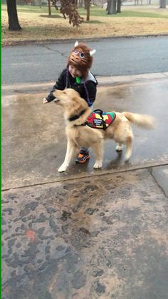 Autism Service dog keeps little boy from wandering into the street  SAVE A DOG, SAVE A VETERAN PACK BUDDY RAISES FUNDS FOR TRAINING RESCUE/SHELTER DOGS TO SERVE AS SERVICE DOGS FOR CIVILIANS AND, FREE, FOR U.S. VETERANS. Anxiety, PTSD, Depression, Physical Disability www.Pack-buddy.com (Veteran Support) 1-760-321-1683