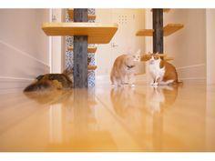 猫の家 写真集P21