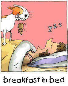 Breakfast in bed - cat humor Cat Jokes, Cartoon Jokes, Funny Cartoons, Cat Humour, Funny Animal Pictures, Funny Animals, Cute Animals, Crazy Cat Lady, Crazy Cats