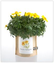 Check out this great review of our Garden-in-a-bag Marigold by Shirley Stein (via Chuckle Farm).