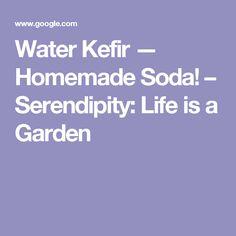 Water Kefir — Homemade Soda! – Serendipity: Life is a Garden