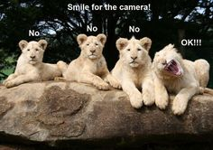 Please Smile For The Camera
