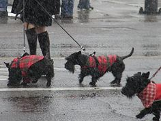 prescott-2011-christmas-parade-scotties