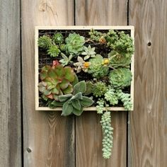 This DIY wall-mounted succulent garden is  easy to make!