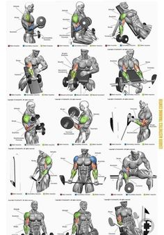 Full Body Workout is part of Biceps workout - Post with 3006 votes and 121599 views Shared by Full Body Workout Shoulder Workout Routine, Full Body Workout Routine, Gym Workout Chart, Best Chest Workout, Gym Workout Tips, Fitness Workouts, Fun Workouts, Body Workouts, Chest Workouts