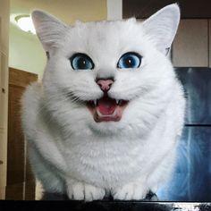este-gato-tem-os-olhos-mais-bonitos-do-mundo-animal-11